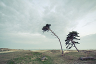 Trees on field by sea against sky - MASF04606