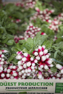 Red radishes in crate outdoors - MASF04663