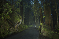 Road amidst forest at Jedediah Smith Redwoods State Park during dusk - CAVF38682
