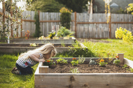 Side view of girl looking plants growing in raised bed at backyard - CAVF38913