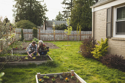 Smiling couple planting in raised bed at backyard - CAVF38925