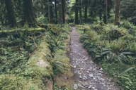 Trail amidst trees growing in forest - CAVF40050