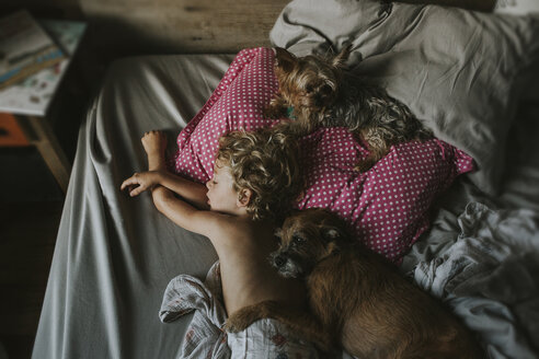 High angle view of boy sleeping with dogs on bed at home - CAVF40131