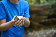 Midsection of boy holding frog in forest - CAVF40464
