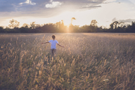Rear view of boy with arms outstretched standing amidst plants on field during sunset - CAVF40908