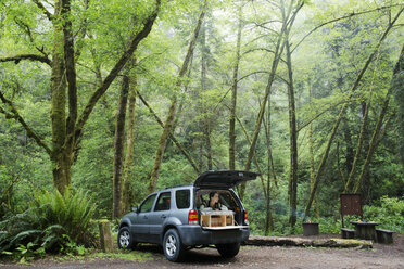 Hiker looking away while sitting in sports utility vehicle at forest - CAVF42493