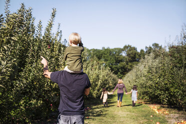 Rear view of father carrying son on shoulder while standing in apple orchard - CAVF42970