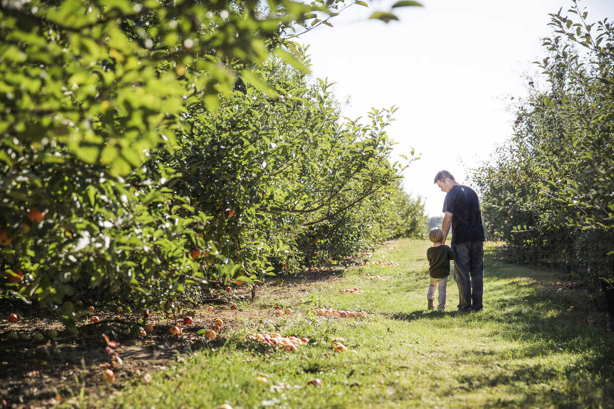 Rear view of father and son walking on field in apple orchard - CAVF42976 - Cavan Images/Westend61