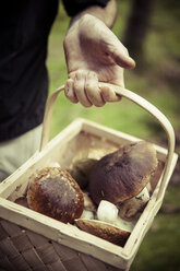 Midsection of man holding basket of mushrooms - MASF05531