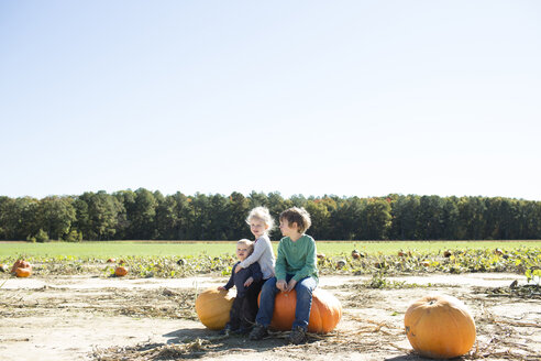 Siblings sitting on pumpkins on field against clear sky during sunny day - CAVF43138