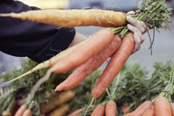 Cropped image of woman buying carrots at vegetable stall - MASF05851