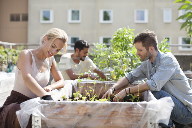 Young couple gardening at urban garden with man in the background - MASF05920