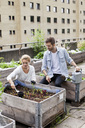 Young Caucasian couple examining plants at urban garden - MASF05923