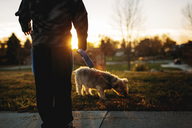 Low section of boy with Yorkshire Terrier in park during sunset - CAVF43477