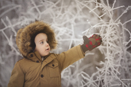 Cute boy touching frozen plant during winter - CAVF43513
