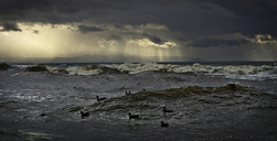 Birds swimming on waves against cloudy sky - CAVF43570