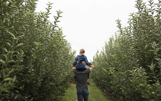 Rear view of father carrying daughter on shoulders while walking in orchard - CAVF43639