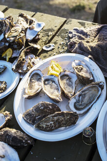 Oysters on table - CAVF43729