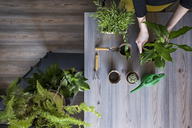 Overhead view of woman planting potted plants at home - CAVF44842