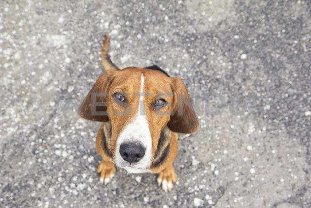 Stray dog - MAMF00073