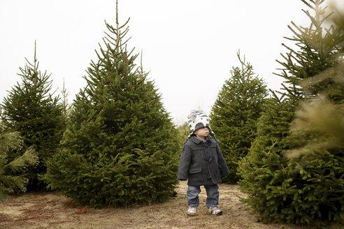 Boy standing in pine tree farm against clear sky - CAVF45951