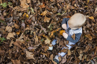 Overhead view of toddler sitting amidst dry leaves during autumn - CAVF45957