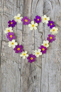 Heart formed with primrose blossoms on weathered wood - CRF02791
