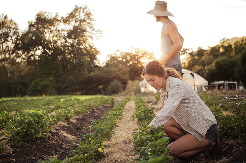 Female farmer working on field while man standing during sunny day - CAVF47438