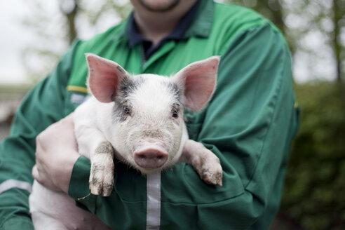 Small pig - MASF06971