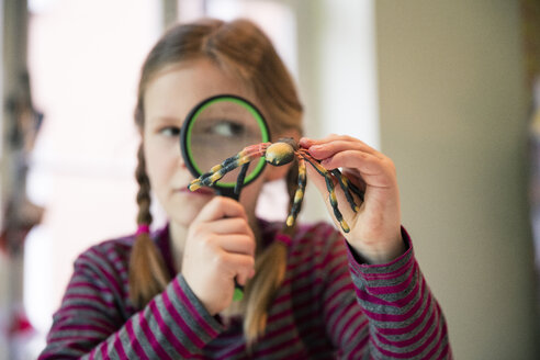 Girl examining fake spider with magnifying glass - MOEF01098