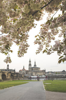 Germany, Saxony, Dresden, Augustus Bridge, Dresden Cathedral, banks of the Elbe, almond blossoms - ASCF00849