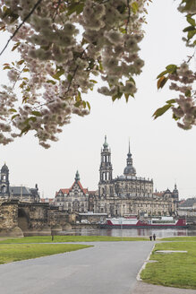 Germany, Saxony, Dresden, Augustus Bridge, Dresden Cathedral, banks of the Elbe, almond blossoms - ASCF00852