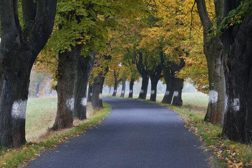 Czechia, Bohemia, Bohemian Switzerland, Country road lined with maple trees - RUEF01853