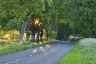 United Kingdom, England, Dorset, beech tree lined road with sunbeams - RUEF01859