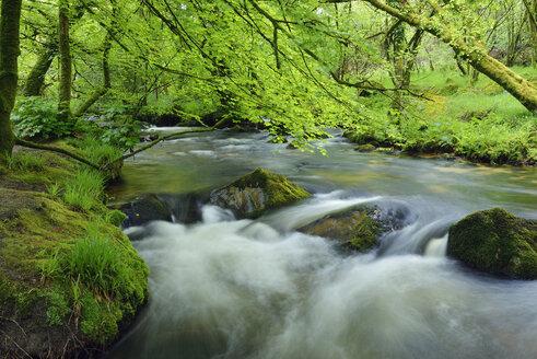 United Kingdom, England, Cornwall, Liskeard, River Fowey, Golitha Falls - RUEF01862
