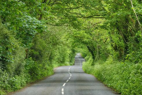 United Kingdom, England, Cornwall, rural road through green tunnel in forest - RUEF01865