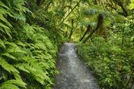 New Zealand, South Island, Otago Region, Catlins Forest Park, Matai Falls Walk, Hiking path - RUEF01877