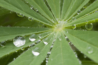 Raindrops on leaf, close-up - CRF02793