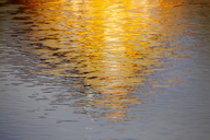 Germany, yellow water reflection - JTF00992