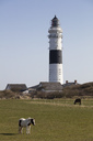 Germany, Schleswig-Holstein, North Frisian Islands, Sylt, Kampen, Rotes Kliff, lighthouse and horses on meadow - WIF03500