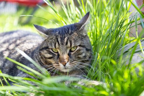 Cat lying in grass - SARF03702