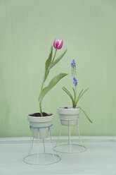 Flower decoration, upcycling of lampshade as flowerpot - GISF00331