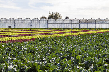 Germany, Constance district, Reichenau Island, greenhouses and vegetable cultivation - WD04632