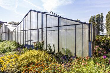 Germany, Constance district, Reichenau Island, Niederzell, greenhouse - WD04638