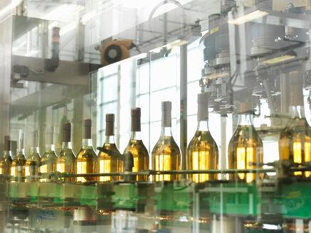 Wine bottles in plant - CUF00136