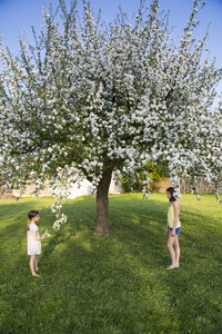 Two girls standing barefoot in the garden in front of blossoming apple tree - LVF06928