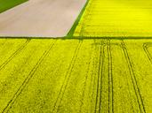 Germany, Hesse, Wetterau, flowering rape field, Brassica napus - AMF05704