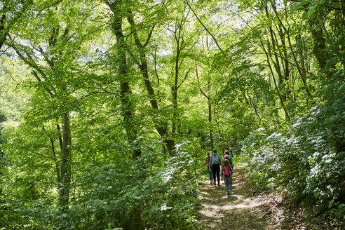 Kids on a field trip in forest - ZEDF01401