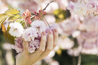 Woman holding cherry blossoms - CHPF00459