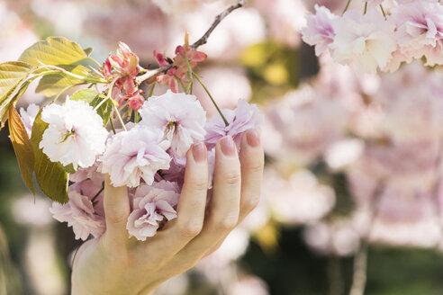 Woman holding cherry blossoms - CHPF00459